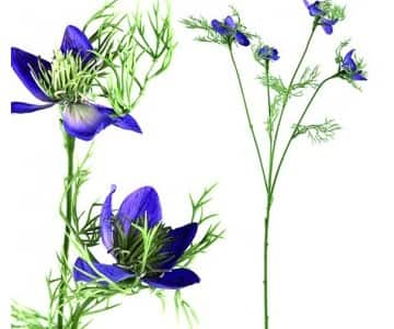 Artificial Blue Nigella Flower (4 Flowers). By PTMD Collection®