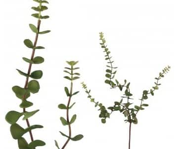 Artificial 'Tremella' Branch / Leaves in Green. By PTMD Collection®