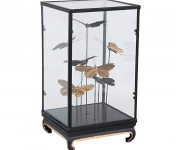 Beautiful ornament; 'Cadence' Black framed Glass case with (artificial) Butterflies. By PTMD Collection®