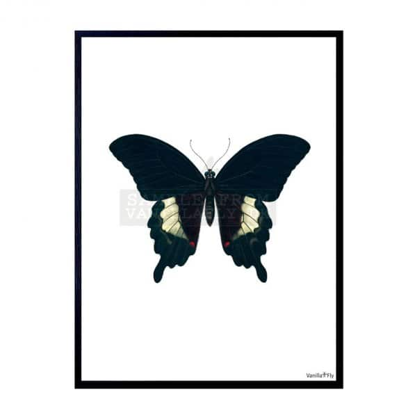 'Black Butterfly' Art Print, mounted in a Black frame, by Vanilla Fly of Denmark