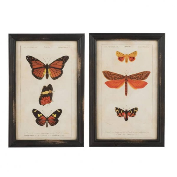 Butterfly Prints, assortment of 2, beautifully framed. From J-Line by JOLIPA