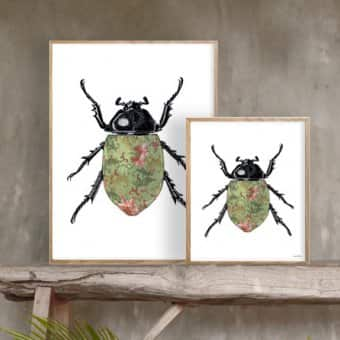 'Coloured Beetle' Poster (20x25cm)
