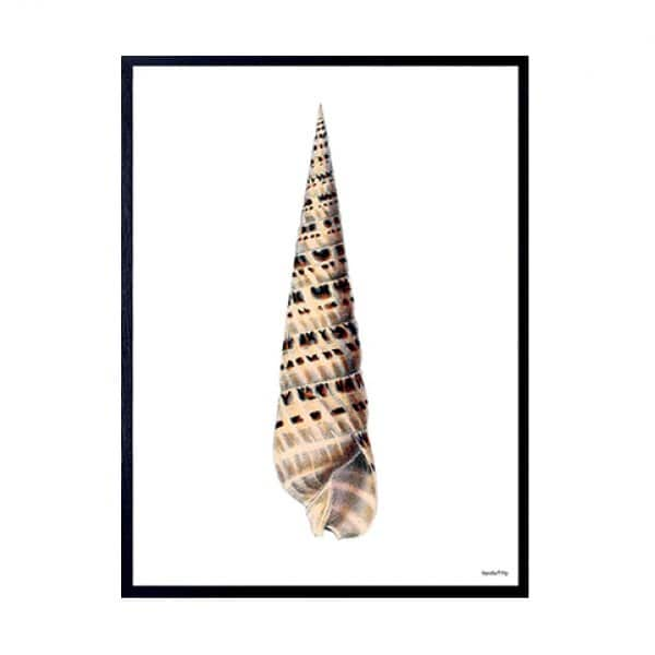 'Conch' (Tall) Print, presented in a Black wooden frame. By Vanilla Fly of Denmark
