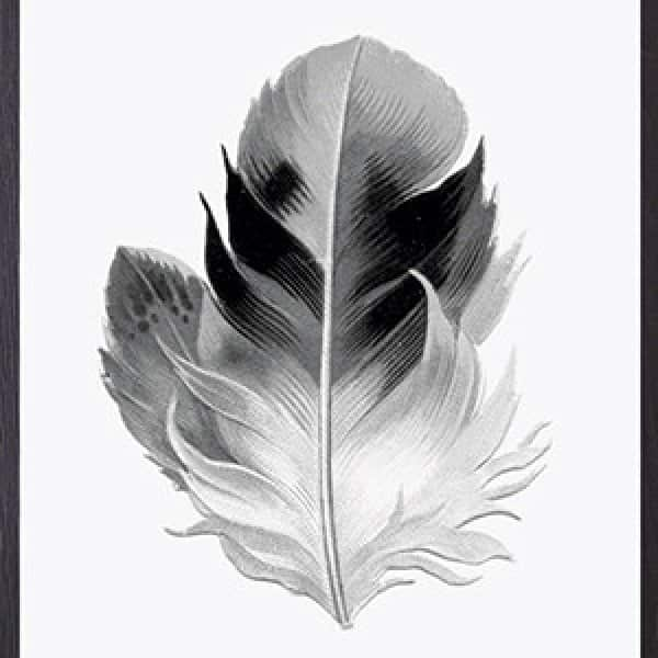 'Feather' Art Print, mounted in a Black frame, by Vanilla Fly of Denmark