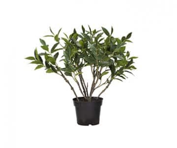 'Flora' Bay Tree, hypoallergenic artificial plant, presented in Green. By Lene Bjerre of Denmark