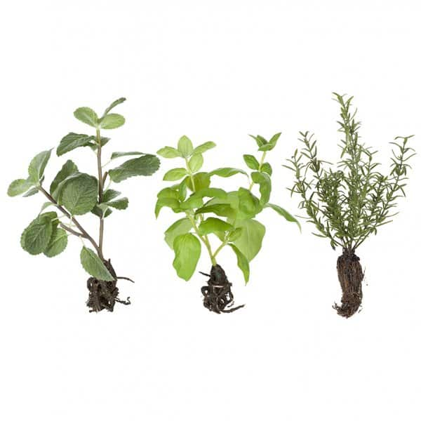 'Flora' Herbs (set of 3), hypoallergenic artificial plants, presented in Green. By Lene Bjerre of Denmark