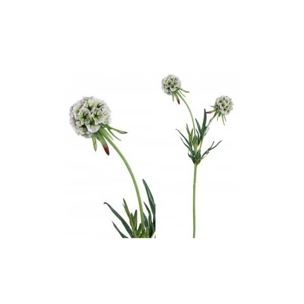 Garden Flower, spray of white Scabiosa. By PTMD Collection®