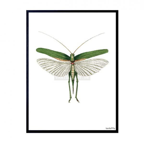 'Grasshopper' Art Print, mounted in a Black frame, by Vanilla Fly of Denmark
