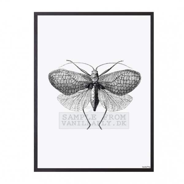 'Moth' Art Print, mounted in a Black frame, by Vanilla Fly of Denmark