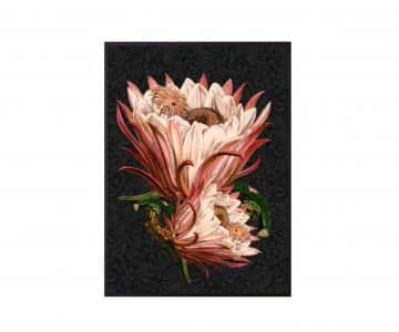 'Pink Protea' Art Print, mounted in a Black frame, by Vanilla Fly of Denmark