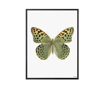 'Sweet Butterfly' Art Print, mounted in a Black frame, by Vanilla Fly of Denmark