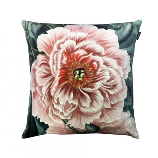 Velvet 'Peony' Cushion, with Duck down filling, by Vanilla Fly of Denmark