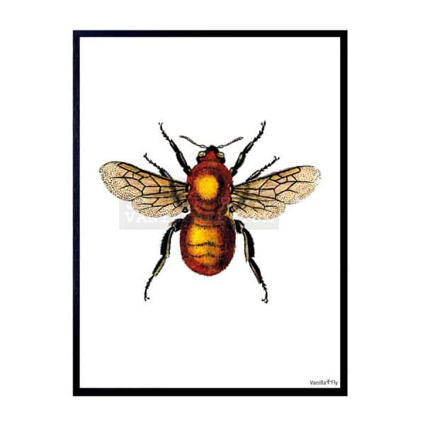 'Yellow Bee' Art Print, mounted in a Black frame, by Vanilla Fly of Denmark
